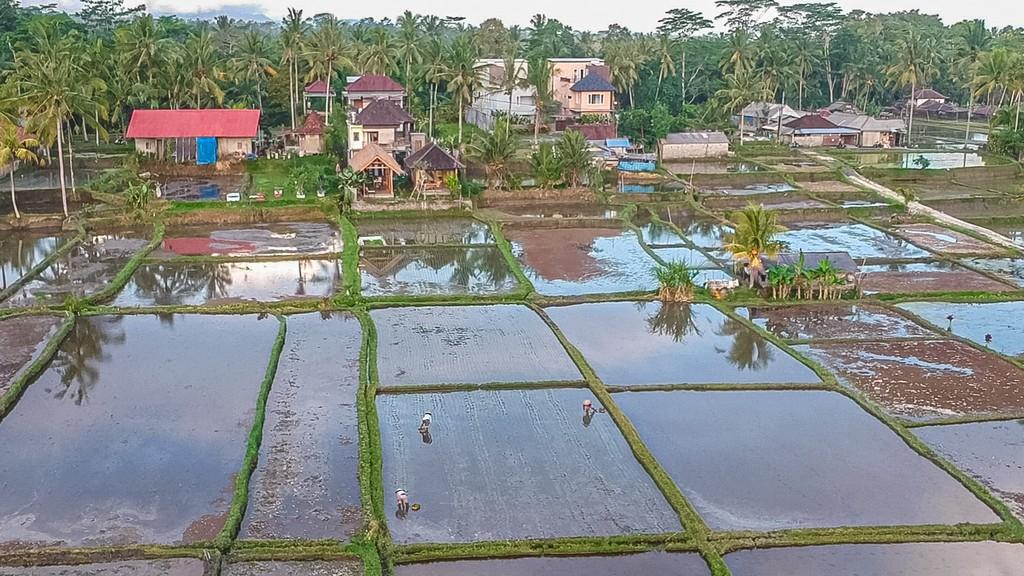 itinerario in indonesia 3 settimane risaie viste dall'alto