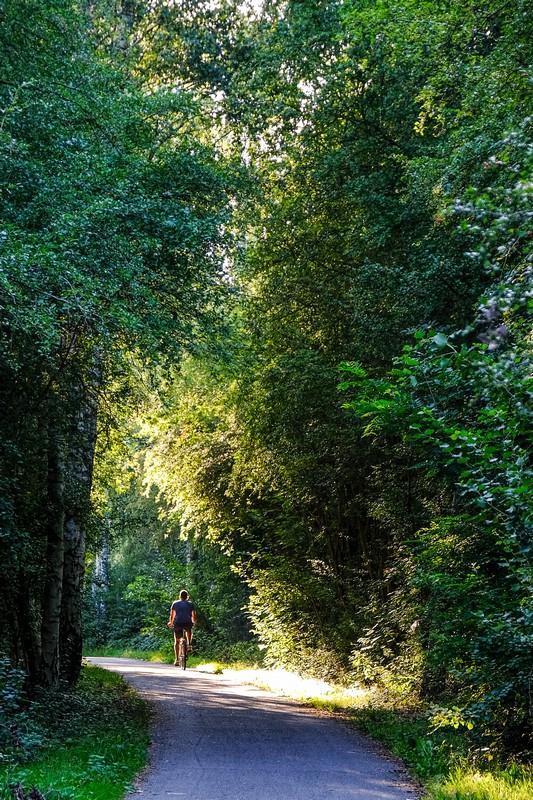 ciclista pedala su pista ciclabile fra gli alberi con luce radente