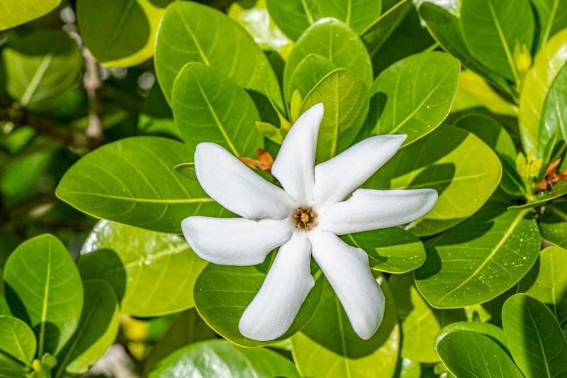 fiore bianco sulla pianta