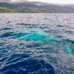 Nuotare con le balene in Polinesia Francese: sì o no?