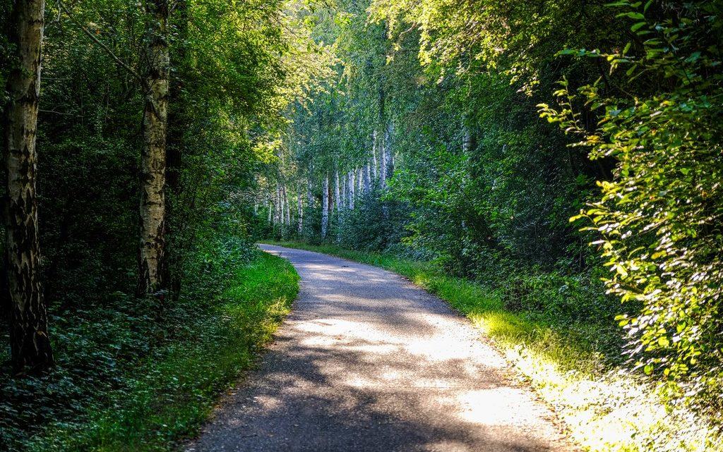 vista di un sentiero fra gli alberi con luce radente del tramonto