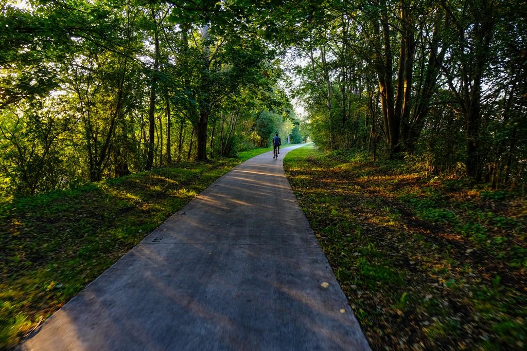 ciclista pedala su pista in mezzo agli alberi con luce radente fra gli alberi al tramonto