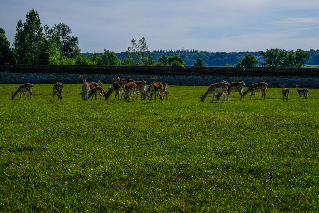 Il parco con i cervi