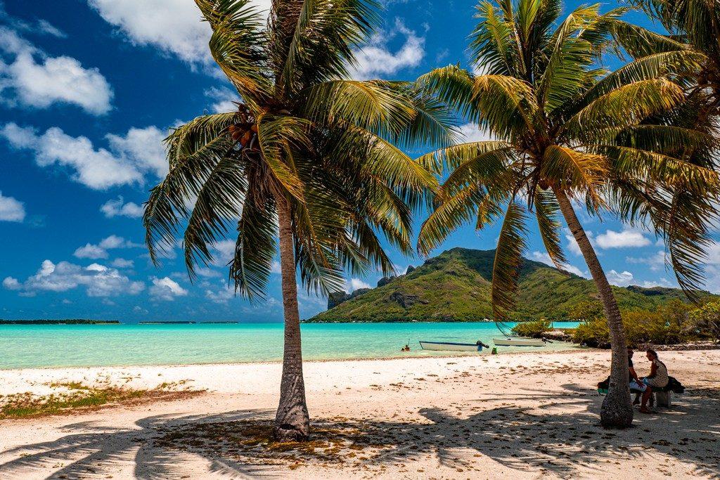 palme in spiaggia