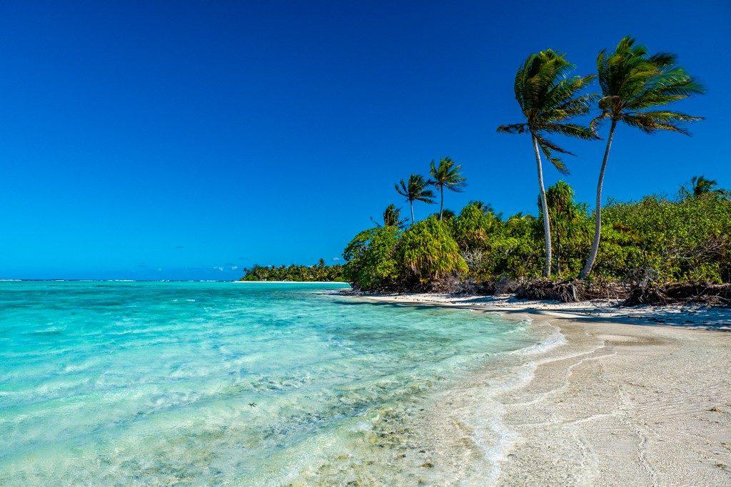 mare con palme ondeggianti