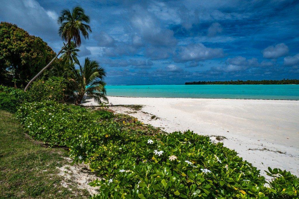 spiaggia con palme e vegetazione