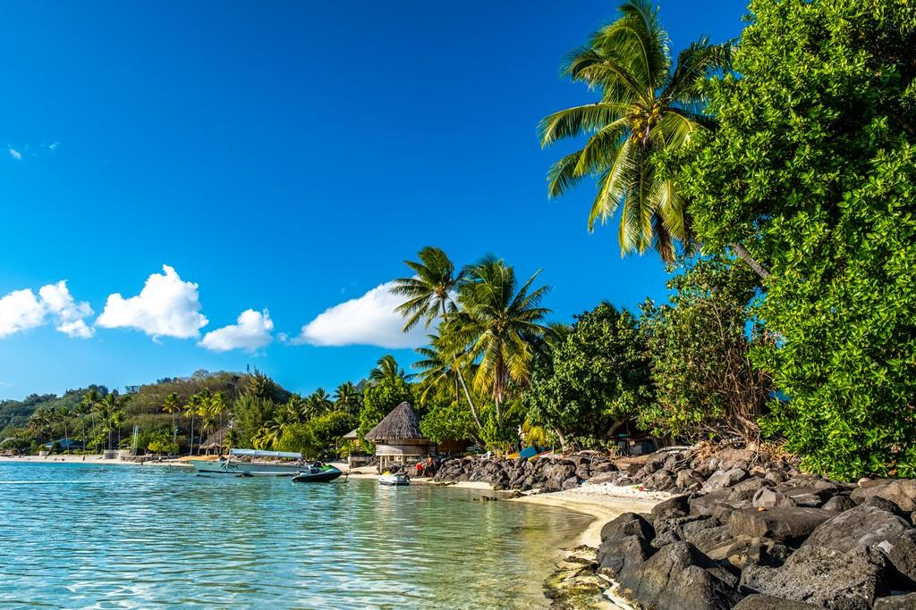 spiaggia con sassi e palme