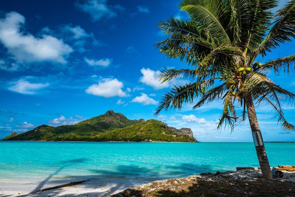 palma in primo piano con isola sullo sfondo