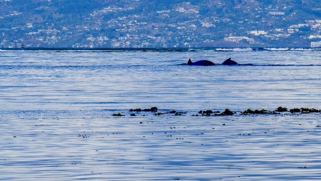 balena con cucciolo in mare
