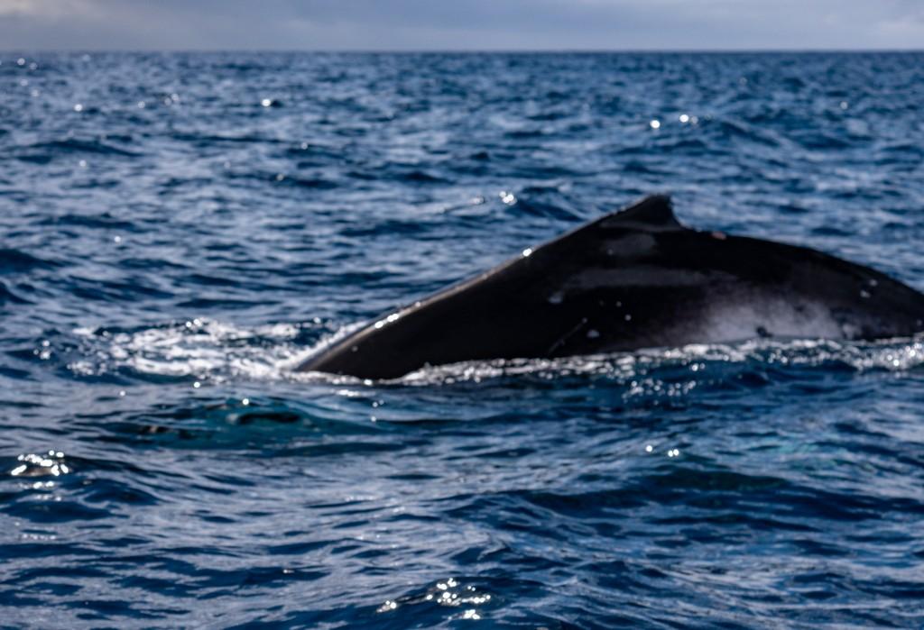 vista del dorso di una balena in mare