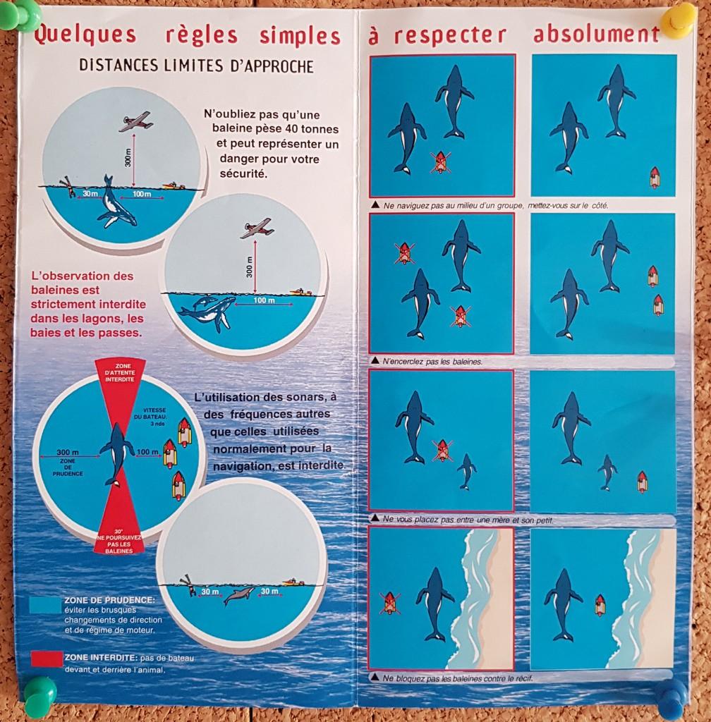 Schema di regole per avvicinare le balene in Polinesia Francese