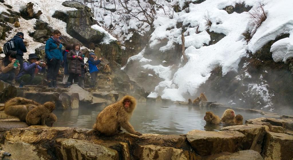 scimmie in una vasca naturale in pietra con turisti