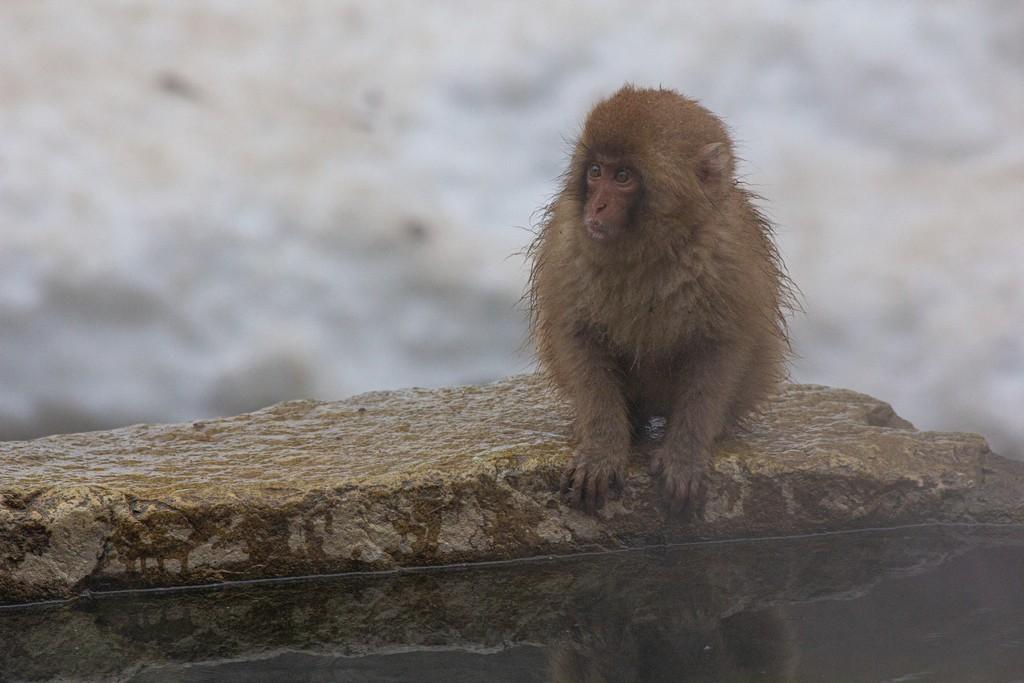 scimmietta sul bordo della vasca
