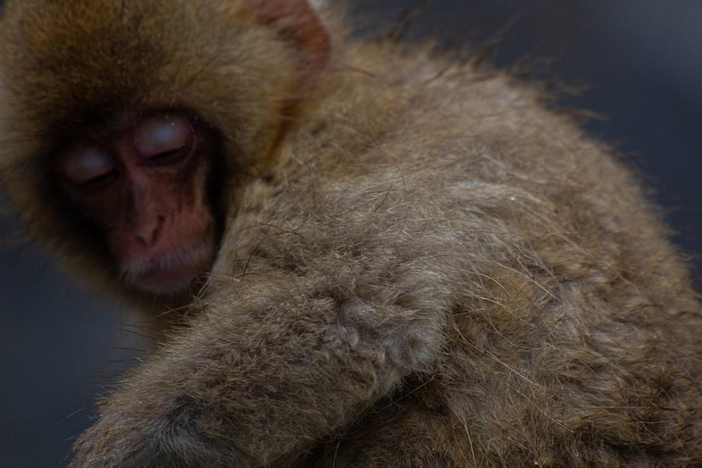 pelo di una scimmia