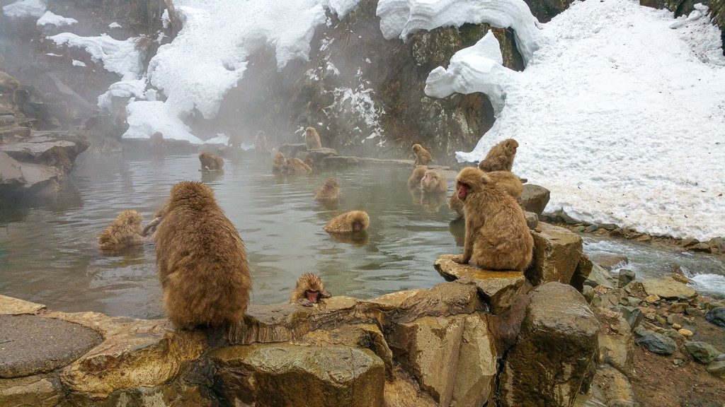 scimmie in una vasca naturale di pietra con neve