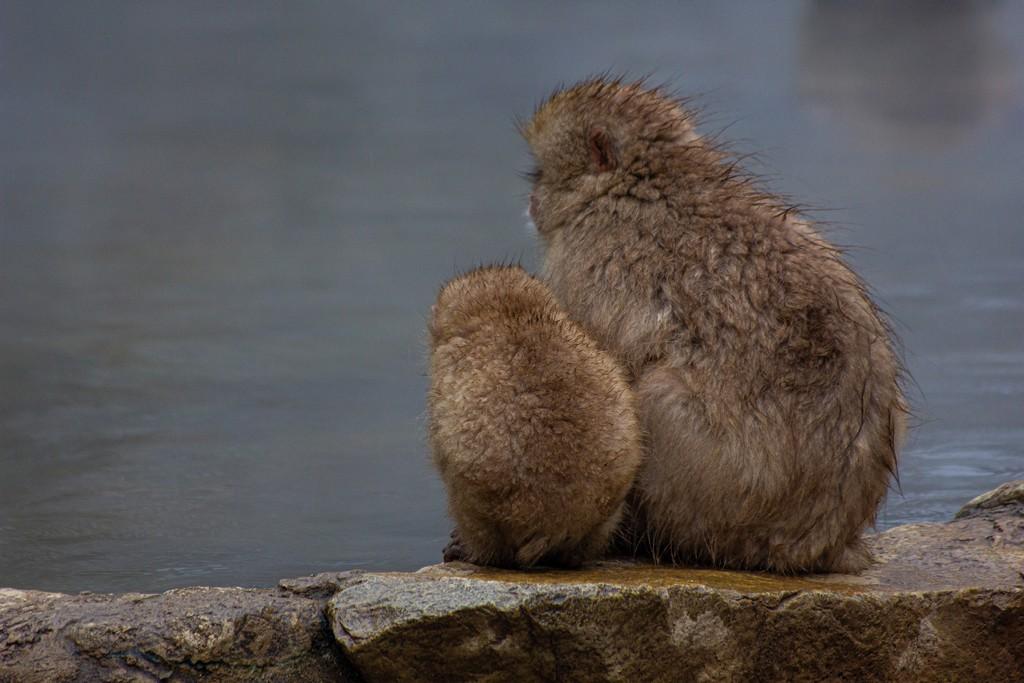due scimmie guardano l'acqua