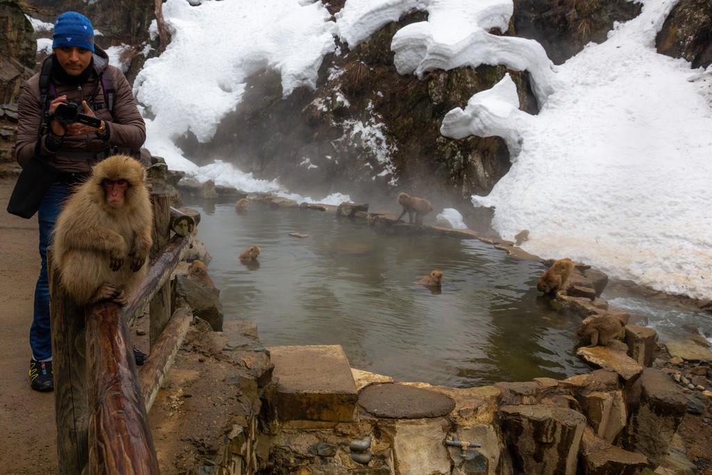 balconata con vista sulla vasca delle scimmie