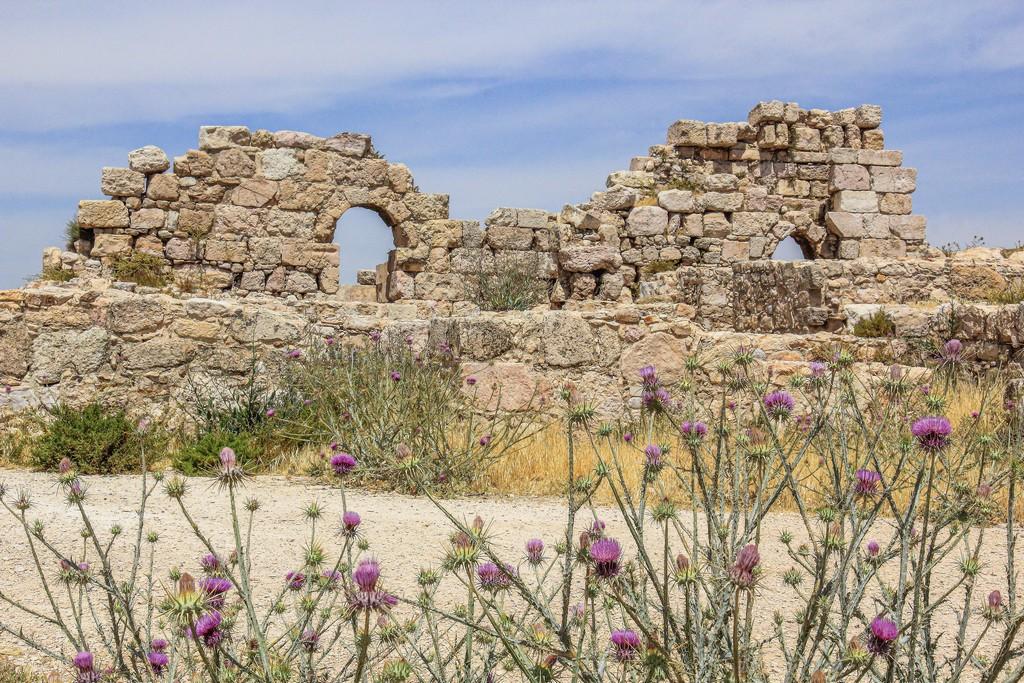 resti archeologici con fiori viola