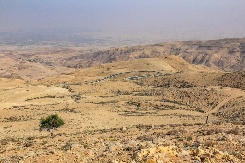 vista della arida valle del giordano con un albero e strada che serpeggia