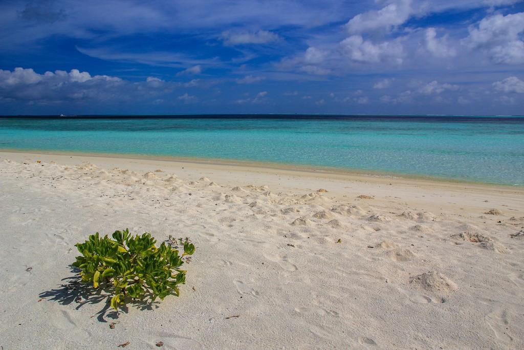 Maldive o Polinesia Francese spiaggia bianca e laguna azzurra