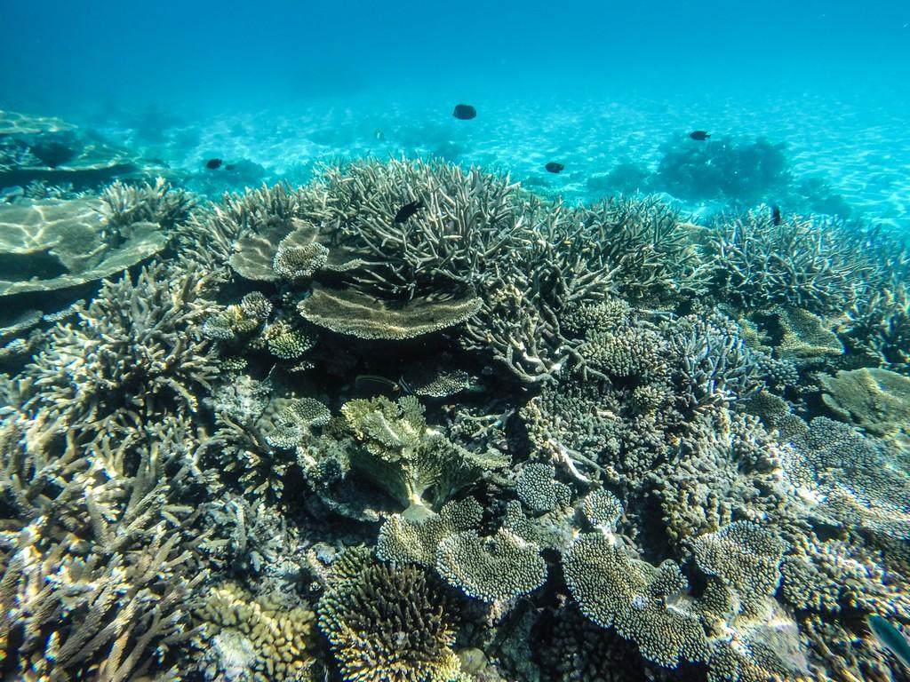 maldive o polinesia francese barriera corallina