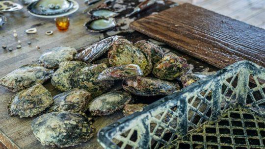 tavolo di lavoro per estrarre perle dalle ostriche