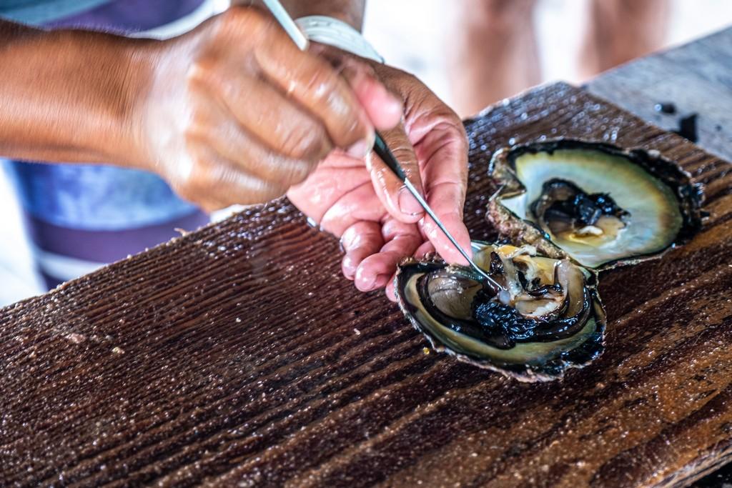 manipolazione di ostrica con strumenti