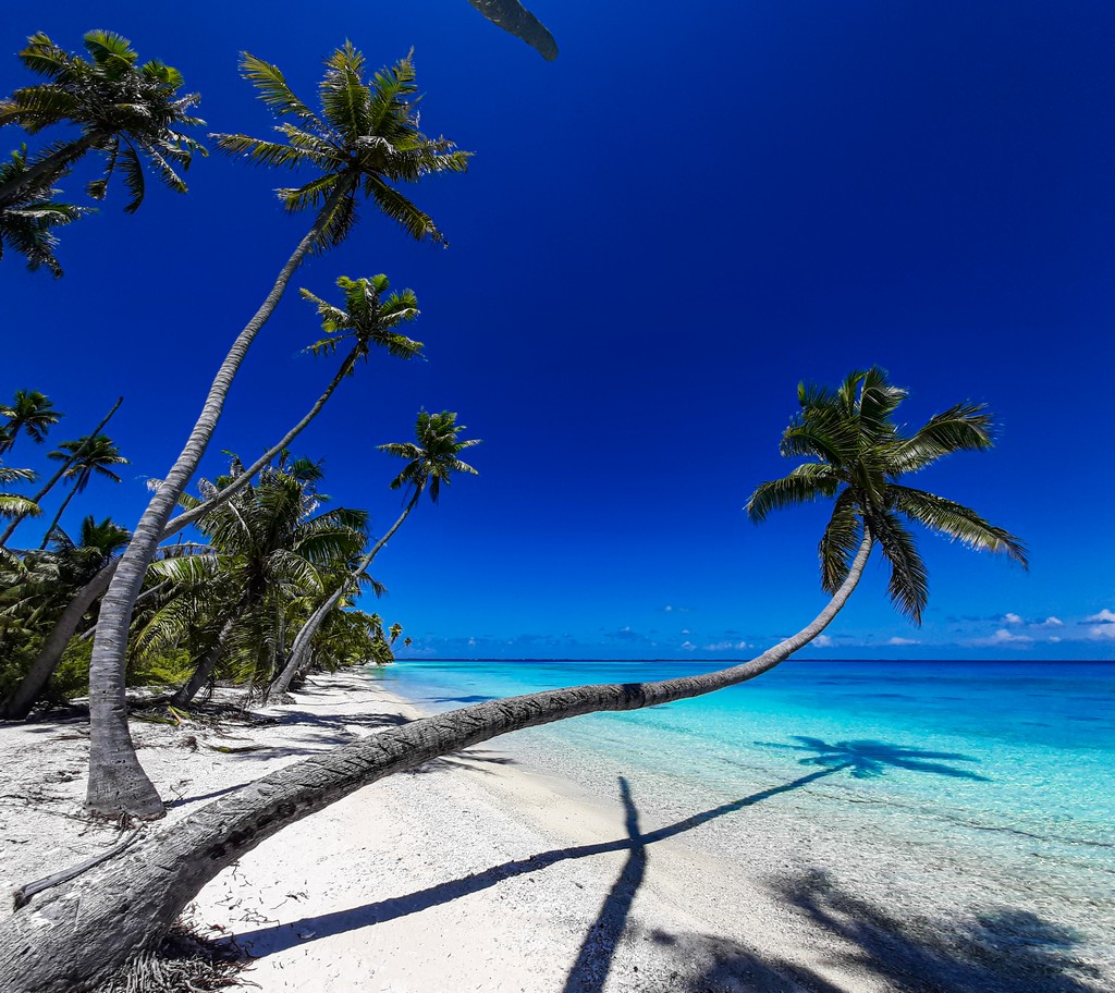 spiaggia bianca con palme di cui una protesa verso il mare
