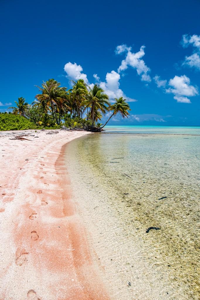 spiaggia rosa con palme