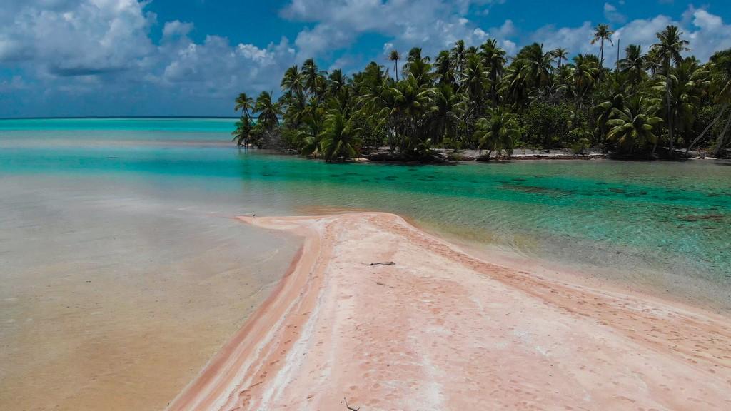 spiaggia di sabbia rosa con palme