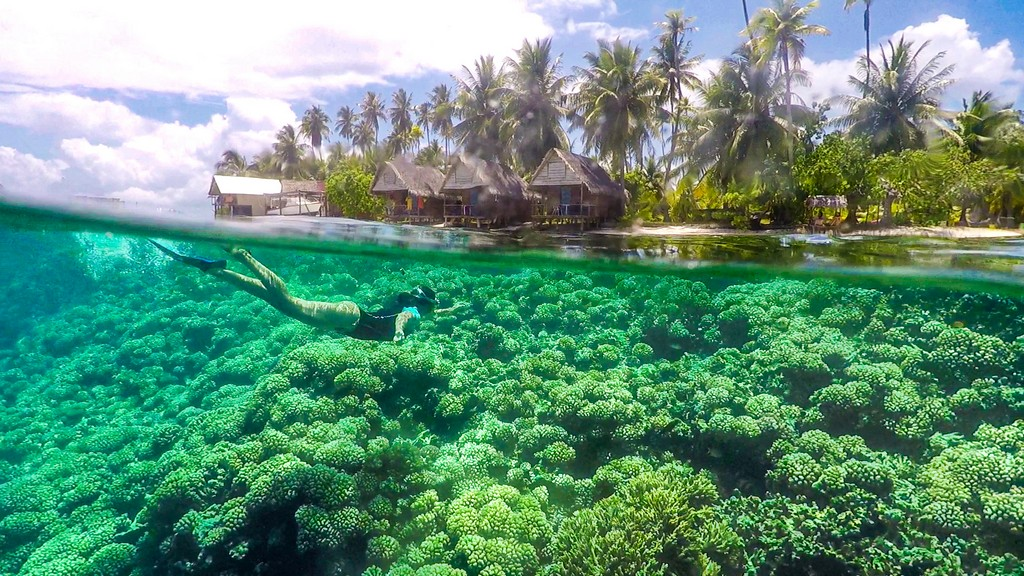 mondo sottomarino e palme con capanne