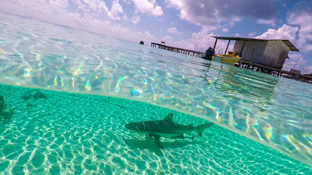 vista di uno squalo in mare con pontile