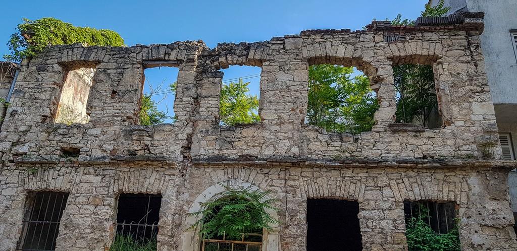 Piante e alberi crescono all'interno di una casa in rovina