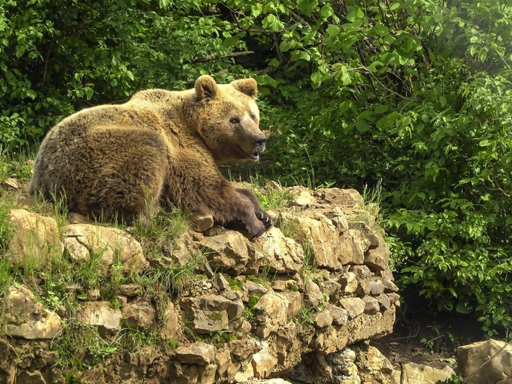 Bear Refuge di Kuterevo: orso che si riposa nel verde