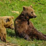 Il Bear Refuge di Kuterevo: in Croazia in cerca di orsi