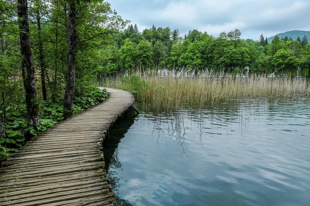 Guida laghi di Plitvice: passerella sul lago e alberi