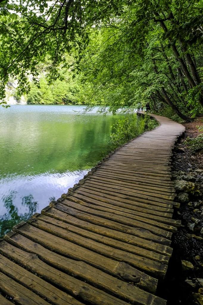 Guida laghi di Plitvice: passerella a lato del lago con alberi