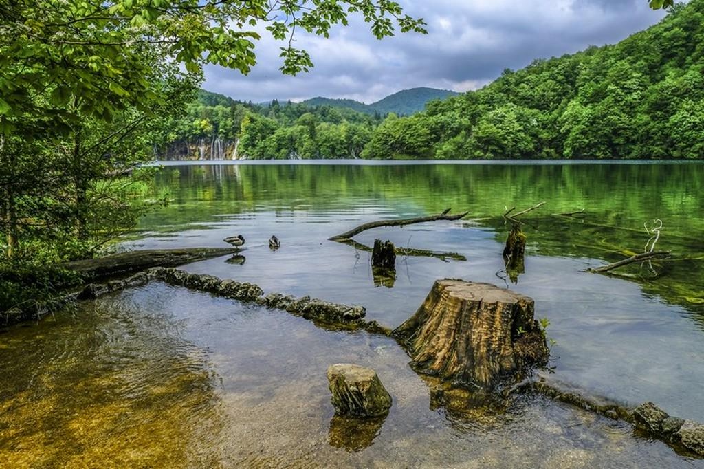 Guida laghi di Plitvice: tronco nel lago con cascatelle