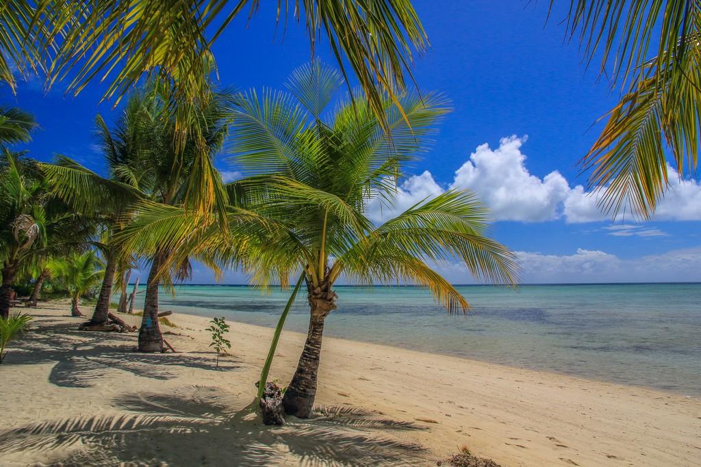 spiaggia con palme