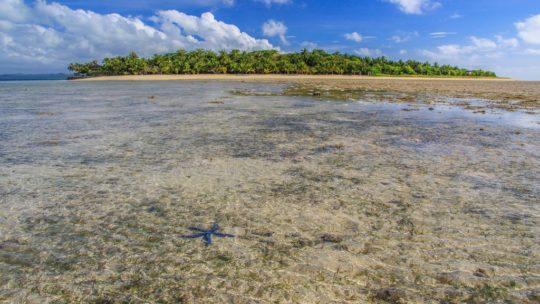 isola con stella marina blu