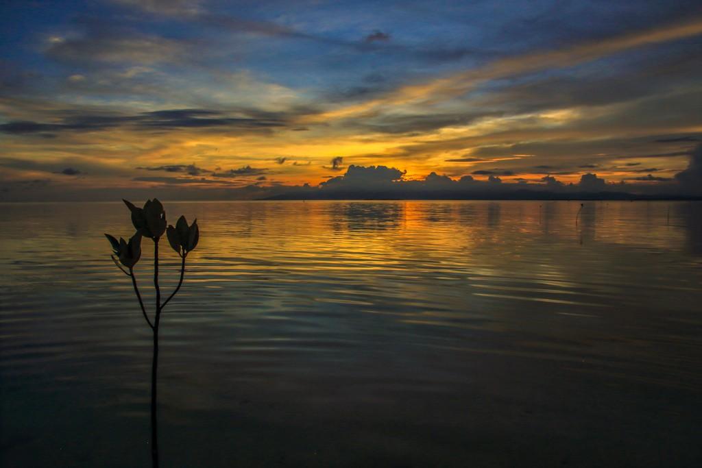 fiore sul mare al tramonto