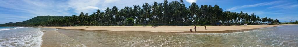 lunga spiaggia con palme in panoramica