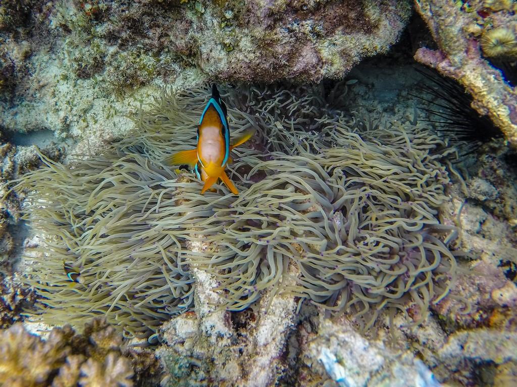 pesci e barriera corallina