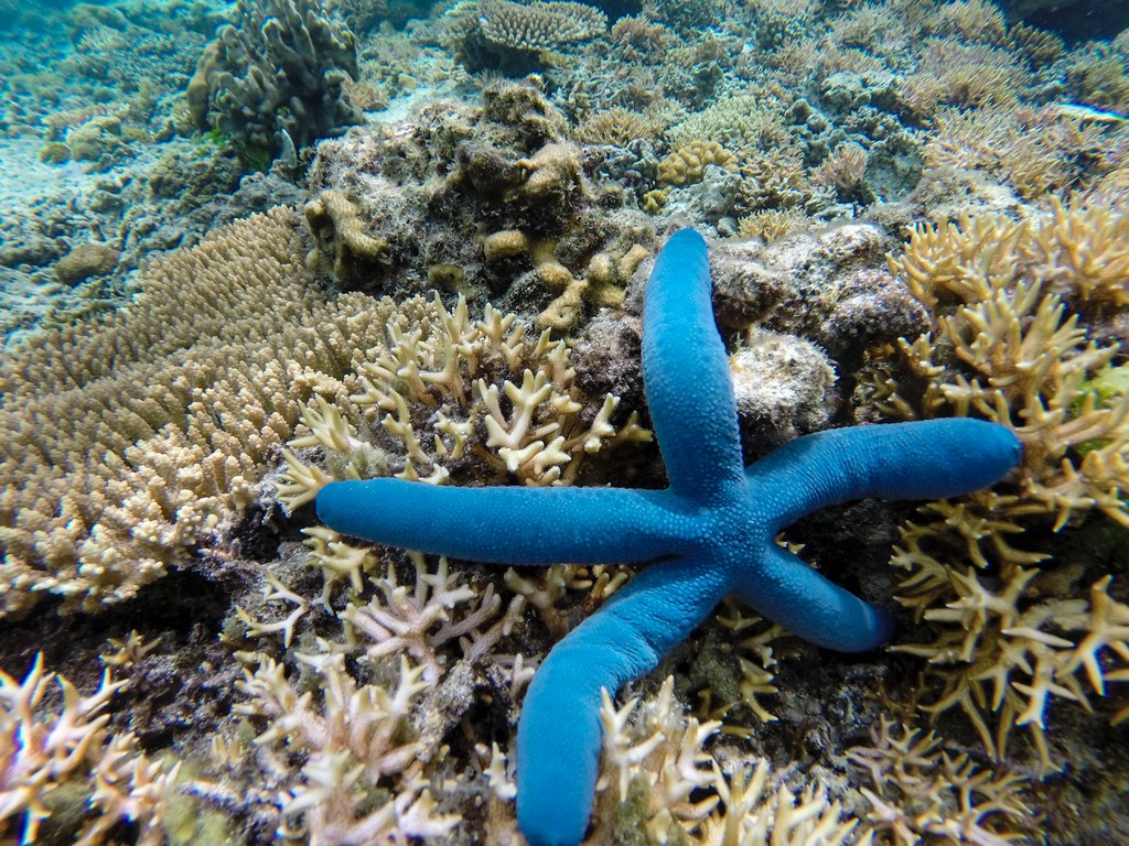 pesci e barriera corallina stella marina blu