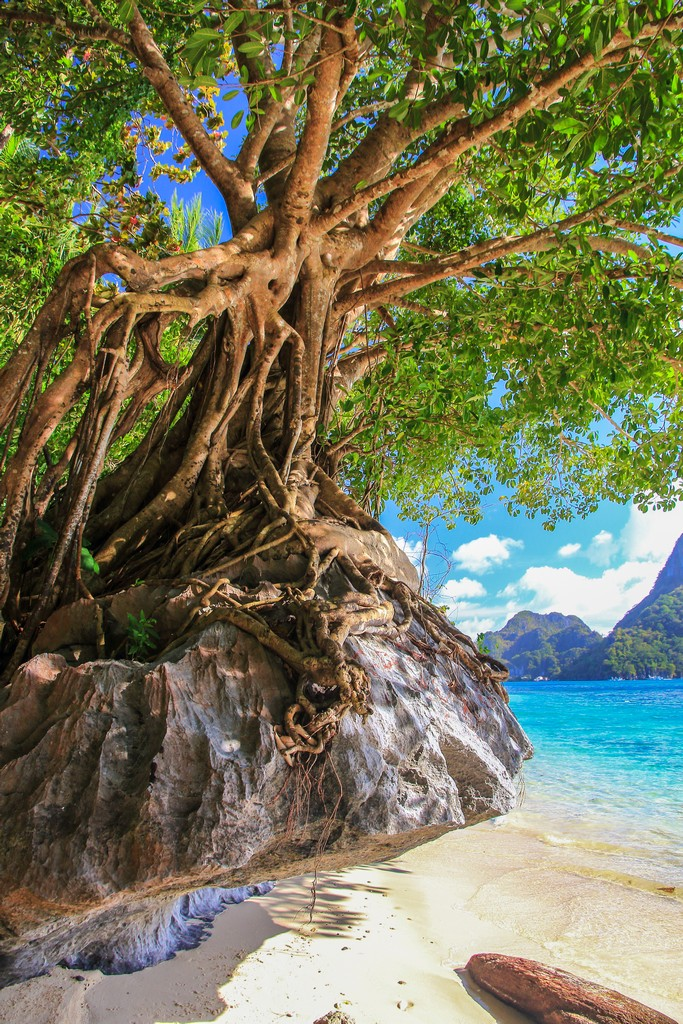 albero su masso