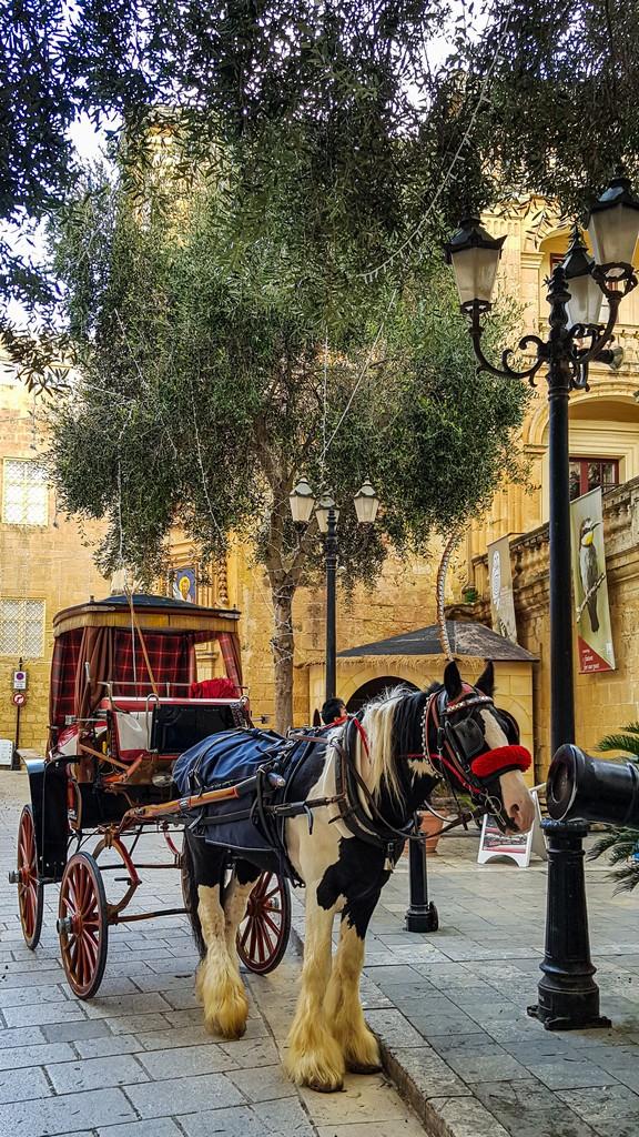 Visita a Mdina carrozza con cavallo