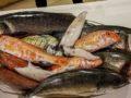 pescato fresco del giorno
