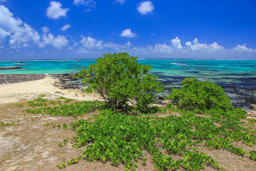 spiaggia con mare azzurro e albero verde