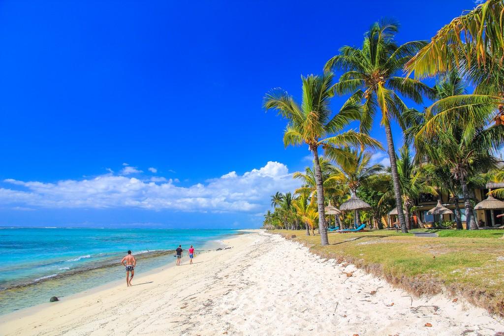 spiaggia con palme e prato verde
