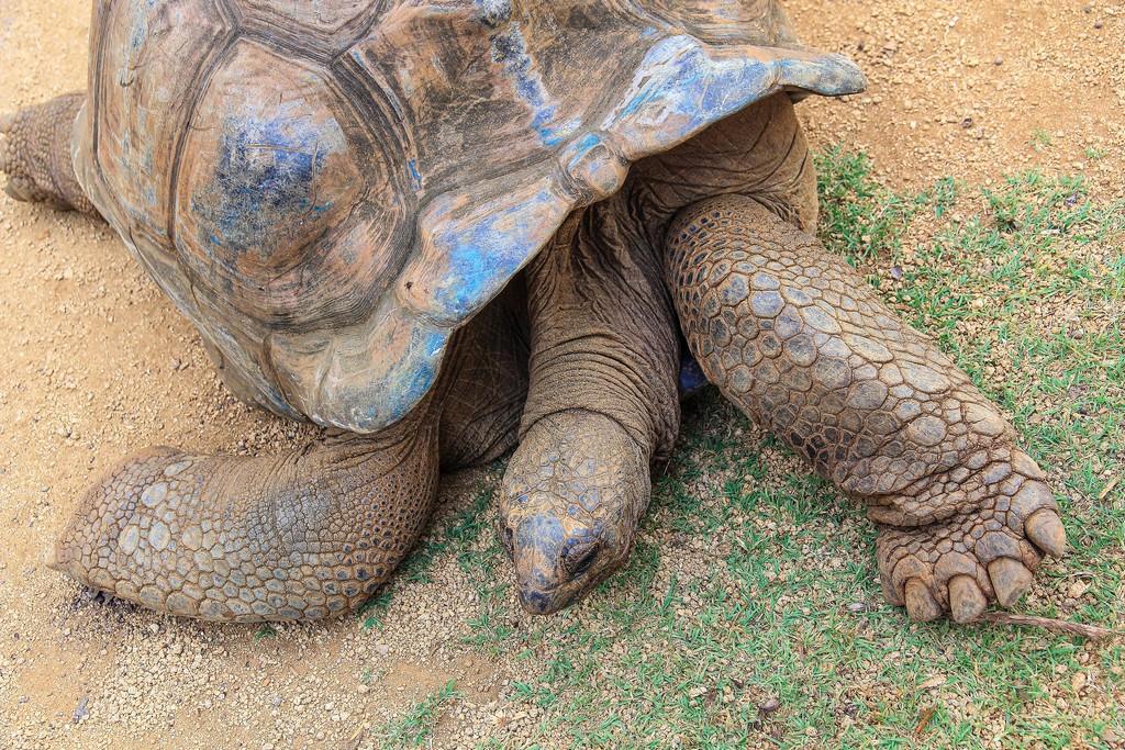 tartaruga che dorme